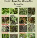 Cheshire Dragonflies and Damselflies Species List