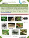 Distinctive Invertebrates in Light Traps