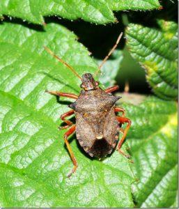 Events ~ North West Invertebrates