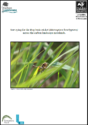 Surveying Bog Bush-cricket (Metrioptera brachyptera) across the carbon landscape mosslands