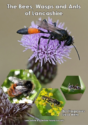 The Bees, Wasps and Ants of Lancashire
